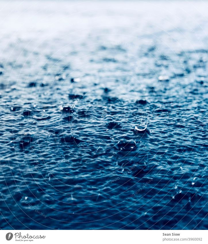 Heavy raining pours down to the ground Wet Rain Cold Water Rainy weather Weather Environment Drops of water Gloomy Day depressingly depressive Bad weather rainy