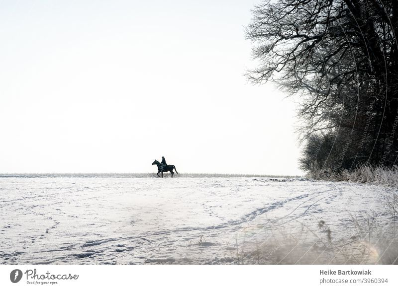 Rider in the snow Horse Snow Snowscape Leisure and hobbies Exterior shot Equestrian sports Colour photo Joy Silhouette Day Shadow White Black Gray