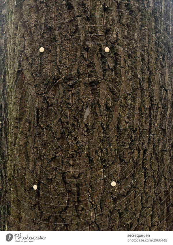 Tabula Rasa. Tree bark Nature Wood Brown naturally Environment background Timber Close-up Rough Detail Surface Material Old Oak tree hardwood Pattern