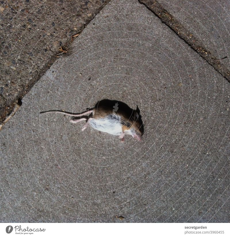 Everything is transient. Mouse dead Death Mortal agony floor sad compassion graphically Light Shadow Life Nature Animal Dead animal Exterior shot Colour photo