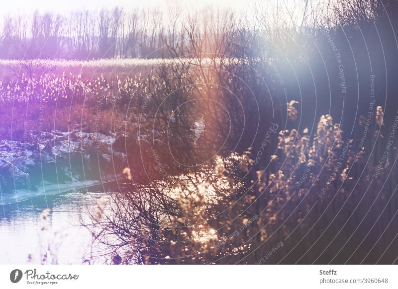 Winter day on the riverbank River bank small river Winter's day winterly silence Brook Banks of a brook Water Flow Lens flare Light reflection certain light