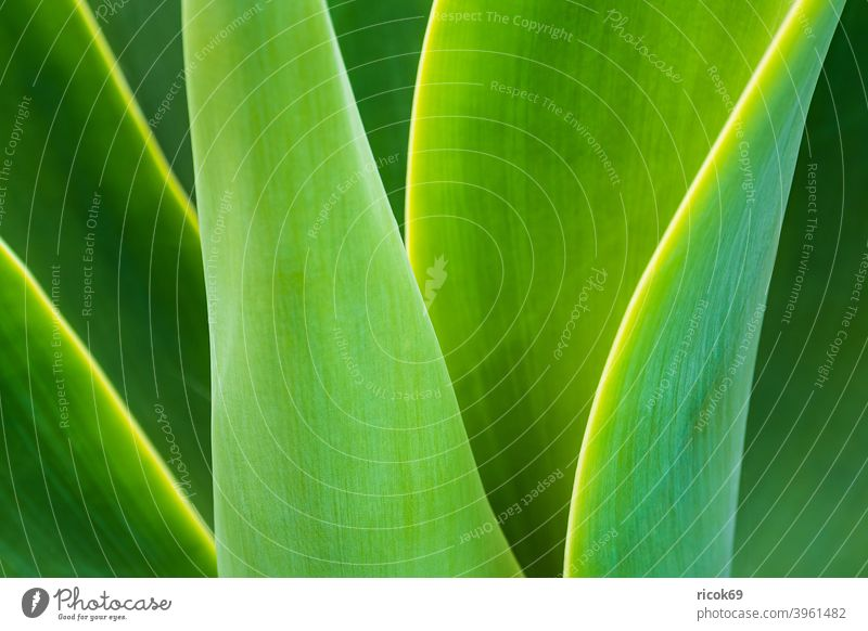 Detail of a green plant on Madeira Island, Portugal Plant fauna Green Plantleaf Leaf detail atlantic ocean Nature vacation voyage Relaxation Tourism relax