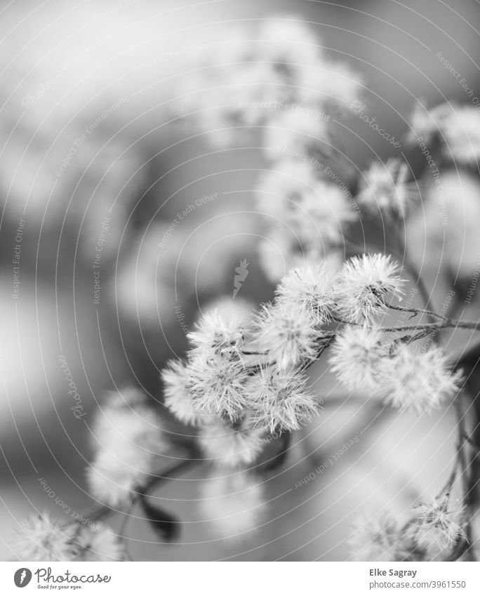 Plants in winter black / white Winter Cold Nature Ice Exterior shot Black & white photo Close-up Detail