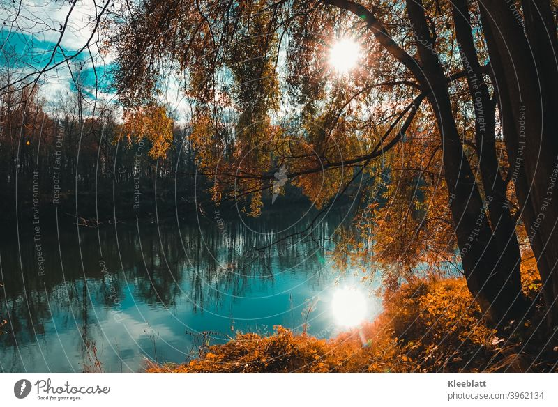 At the beautiful blue Danube - autumn atmosphere at the river in which the sun is reflected Autumn, Moody Tree Exterior shot Landscape Colour photo Day Sunlight