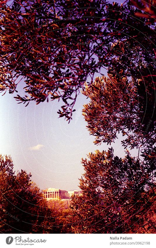 Ancient building in Athens upper town Analog Analogue photo Colour Acropolis trees branches Sky Greece Parthenon Antiquity Architecture Old Landmark Historic
