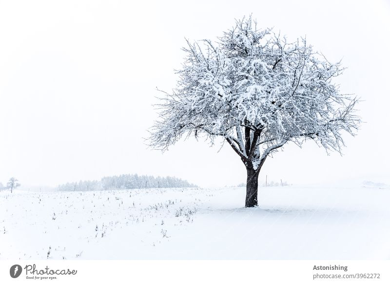 lonely tree in the snow Snow Winter Lonely Nature Landscape Plant White Sky Treetop Cold Exterior shot Frost Day Environment Weather bark winter landscape