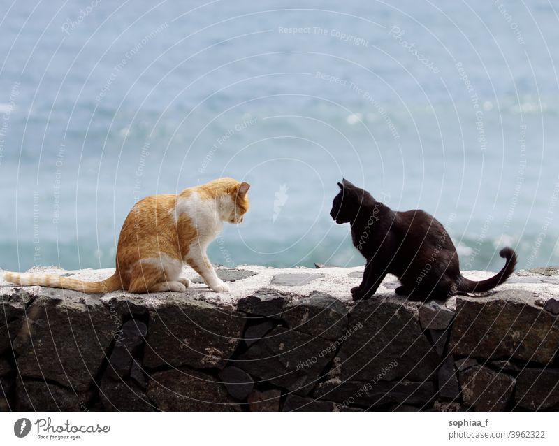 two cats sitting on wall, facing each other and arguing - cat meeting argument talking confrontation conversation interacting fight conflict disagree