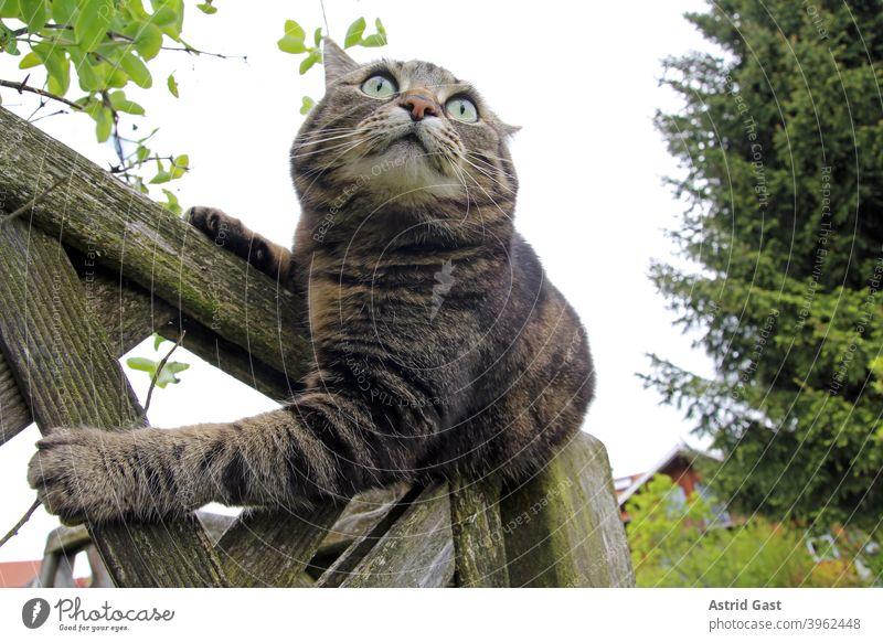 Weitwinkelaufnahme von einer weiblichen braun-schwarzen Katze auf einem Holzzaun katze baum portrait hübsch klein dick neugierig neugierde lustig blick pummelig