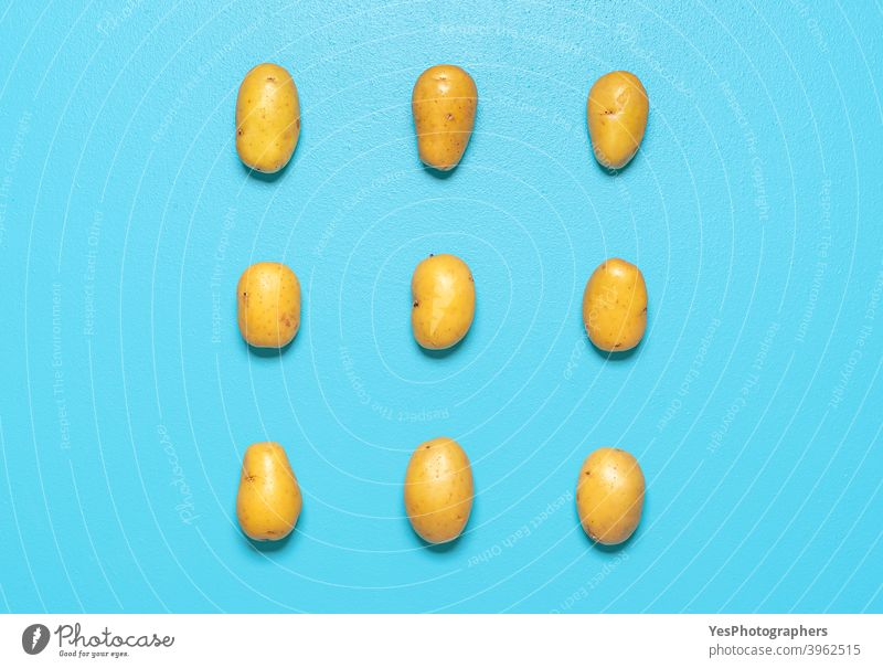 Potatoes isolated on a blue background. Aligned potatoes top view. above view agriculture arranged cut out farmers market flat lay food fresh golden harvest