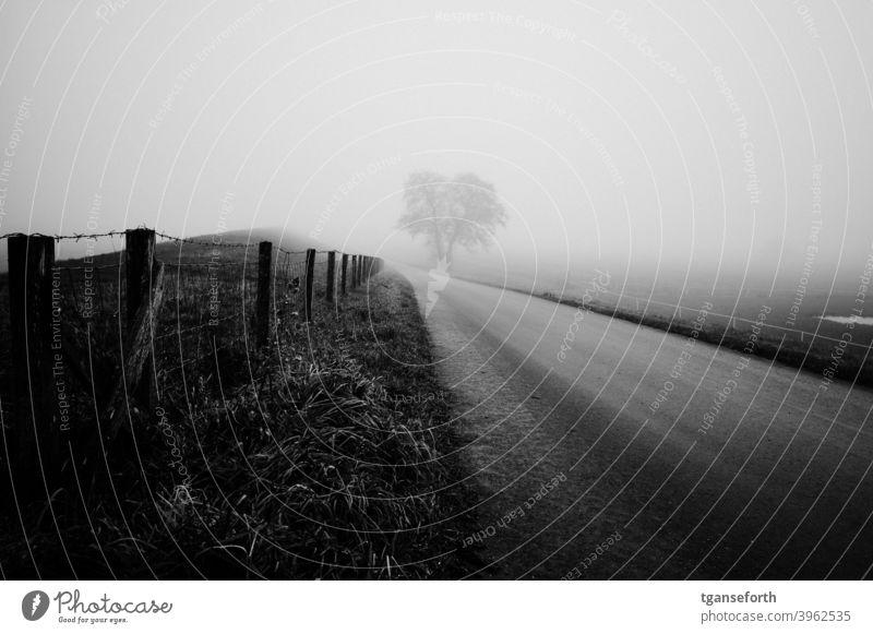 Ems dike in the fog Fog Misty atmosphere Exterior shot Landscape Dike Fence Lanes & trails Tree Day Bad weather Winter Gray Deserted Emsland district off Rural