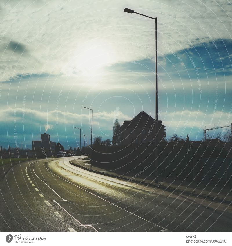 winter afternoon Street Traffic infrastructure Curve Horizon Beautiful weather Tree Dark Illuminate Direction Colour photo Subdued colour Exterior shot Deserted