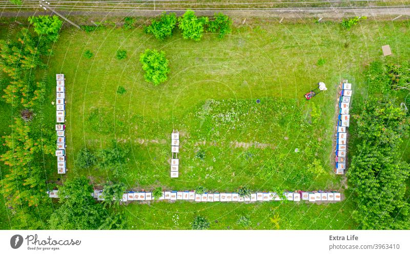 Aerial view of beekeeper as he mowing a lawn in his apiary with a petrol lawn mower Above Apiarist Apiary Apiculture Arranged Beehive Beekeeper Bees Cap Clipper