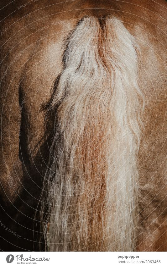 Horsetail horse's tail Exterior shot Macro (Extreme close-up) Tails Hair and hairstyles Back Pelt Mane Brown Detail Farm animal Pony naturally Animal portrait