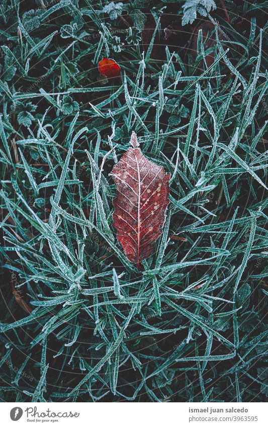 frozen brown dry leaf in winter season leaves frost frosty snow ice ground nature natural foliage abstract textured outdoors background fragility wintertime