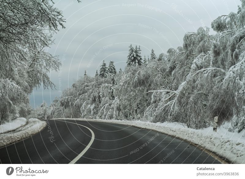 The trees along the road bend under the snow load Weather Snow Winter chill Day daylight Tree Landscape Nature Plant White Season Street snow-laden Bend