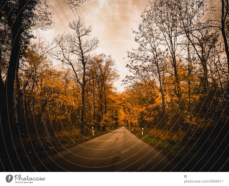 Road through the forest Street Forest Autumn autumn mood trees silent On the way home