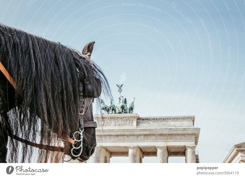 Brandenburg Gate with horse in foreground Berlin Architecture Capital city Quadriga Landmark Tourist Attraction Exterior shot Manmade structures Downtown