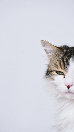 cut portrait of a cat, long-haired mackerel - one green eye looks enigmatically, the ear is torn Cat hangover Cat portrait Profile Animal Pet Domestic cat