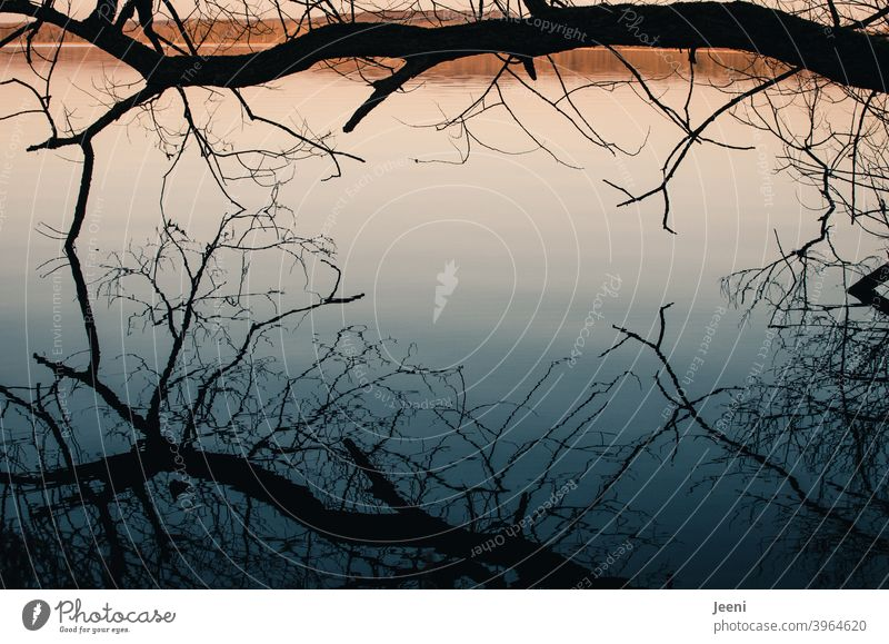 Cold winter day | reflection of a tree in the lake hanging close above the smooth water surface Reflection in the water Moody Calm tranquillity Light Sun