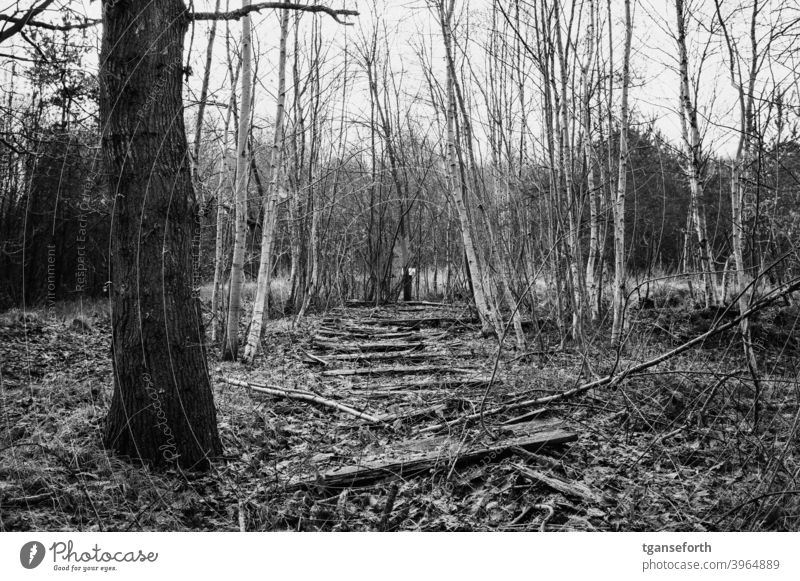 old boardwalk in the moor Bog Moor birch Lanes & trails off Decompose rotting rots Transience Exterior shot Landscape Deserted Forest Black & white photo