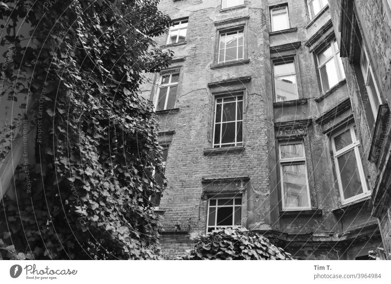 Backyard Prenzlauer Berg Berlin House (Residential Structure) Window Facade Town Deserted Downtown Old building Old town Capital city Day Manmade structures