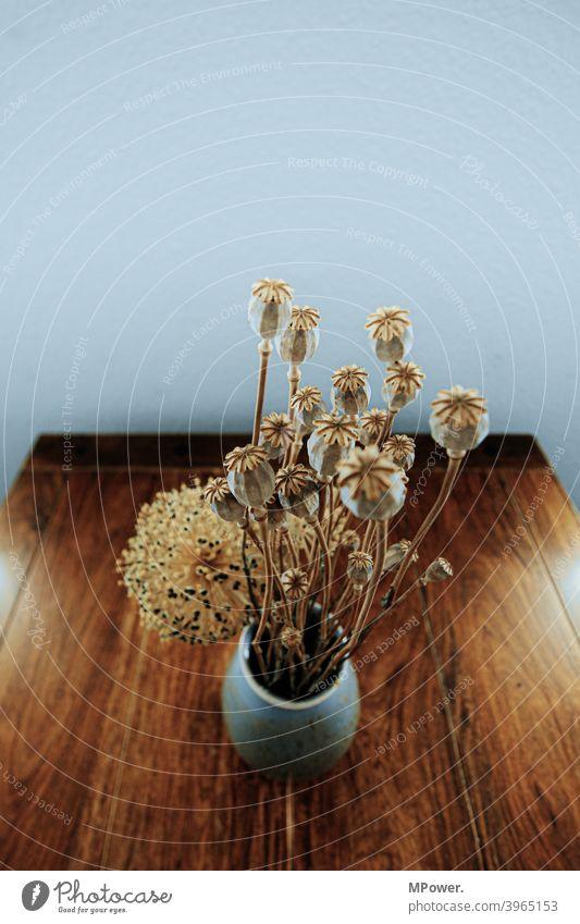 poppy bouquet Poppy Ostrich Dried flower Table Vase Bouquet Interior shot Poppy capsule Flower Brown