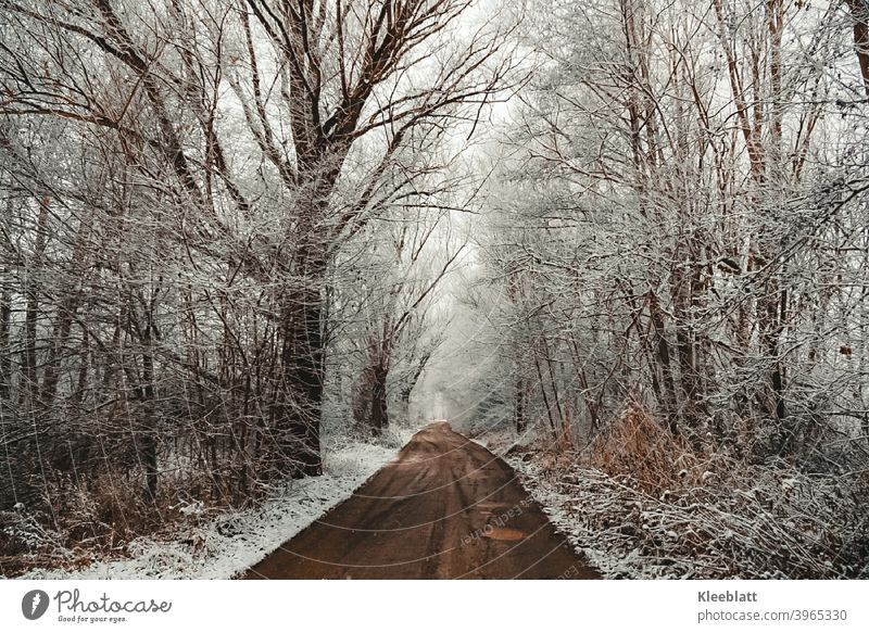 Quietly trickles the snow - silently and quietly it covers forest and meadow - winter Winter Winter dream Snow snowflakes Snow layer Exterior shot Deserted