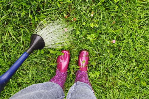 A woman in pink rubber boots waters the lawn with a watering can Rubber boots Boots Wet wet Rain Cast Watering can Lawn Waterproof Woman feet Legs Rainwater