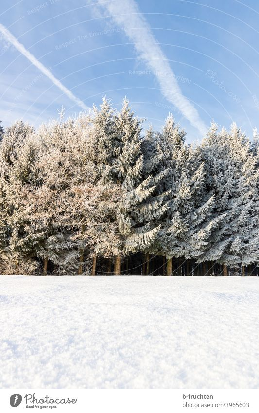 Winter Forest, Winter Landscape, Cold Winter Day Snow Winter forest Tree Nature Frost Exterior shot Winter mood Snowscape Snow layer Winter's day