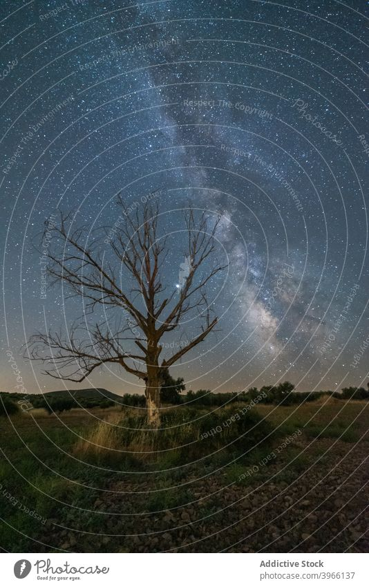 Tree growing in field under starry sky milky way night landscape constellation glow tree galaxy astronomy nature scenery amazing picturesque twilight tranquil
