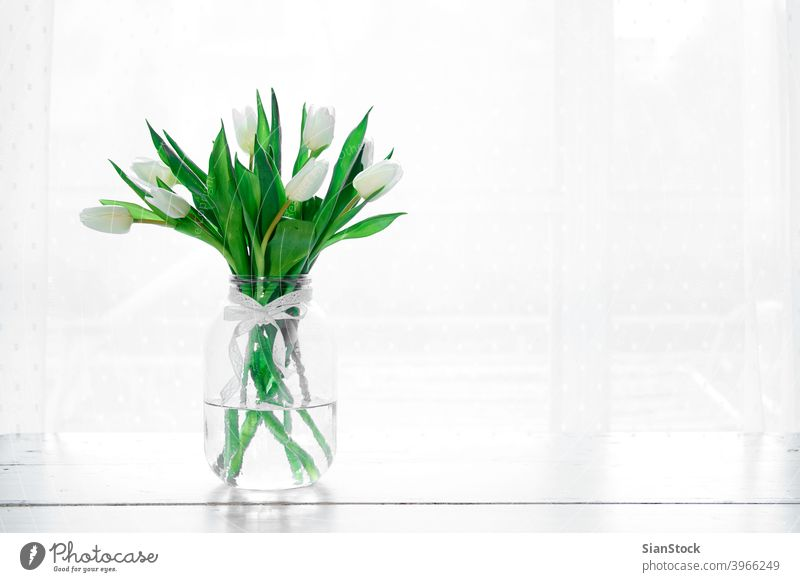 Bouquet of white tulips in a vase isolated background day bouquet window table spring nature green beautiful flower mothers space bunch beauty gift floral