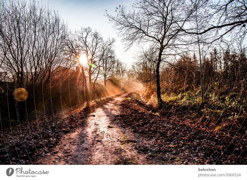 the morning hour has gold in its mouth Autumnal landscape leaves Autumnal weather falling leaves Sunlight Contrast Light Exterior shot Colour photo Footpath