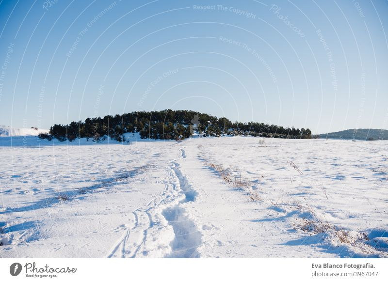 beautiful winter landscape. snowy mountain and forest in a sunny day. Nobody sunbeam jan north horizon season cold time sunshine freezing white tree polar blue