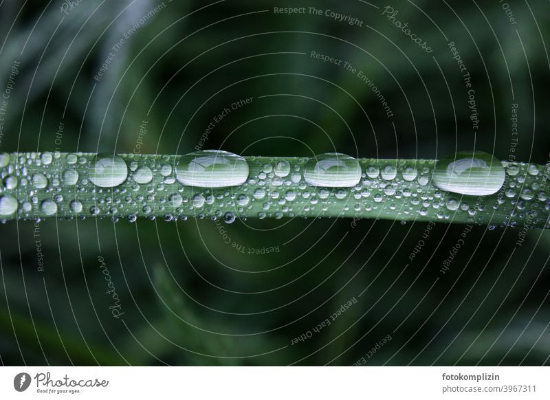 Dew and raindrops on a grass leaf dew drops Drops of water Love of nature Rain Wet Fresh Damp Parallel Rachis melancholy Side by side blurriness unit Mysterious