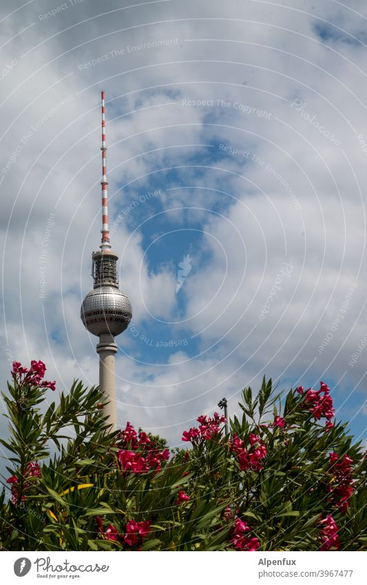 berlin plant Television tower Berlin TV Tower Sky Landmark Capital city Architecture Alexanderplatz Town Downtown Tourist Attraction Downtown Berlin