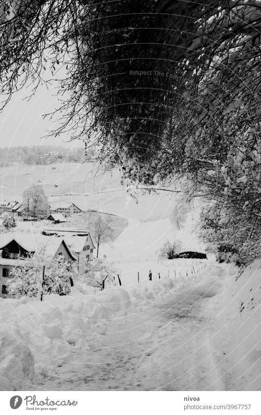 winter landscape Winter Snow Landscape Black & white photo Nature White Deserted Exterior shot Cold Tree Contrast Plant Copy Space top Weather Day Environment