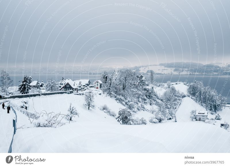Vineyards in winter vines Winter snowed in Snowscape Landscape Subdued colour White Small winter weather Dreary idyllically overcast Switzerland chill