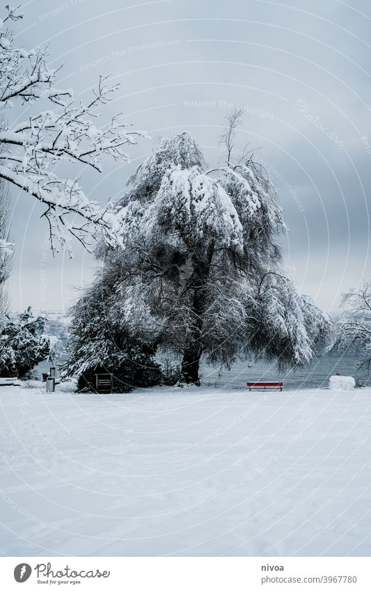 Park in winter at Lake Zurich Promenade Snow Winter Tree zurichsee Bench Exterior shot White Nature Cold Loneliness Landscape Frost Colour photo Day Calm Ice