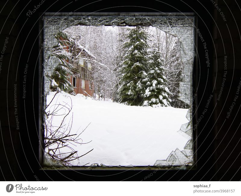 It's cold outside - Winter scenery through a broken window snow winter decay fir tree frame season abandoned trees view glass snowfall lost snowy day
