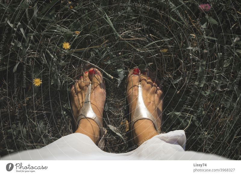 With red painted nails in sandals in the middle of a flower meadow Barefoot Flower meadow Summer Meadow Grass Sandals Nature out Relaxation Sunbeam Colour photo