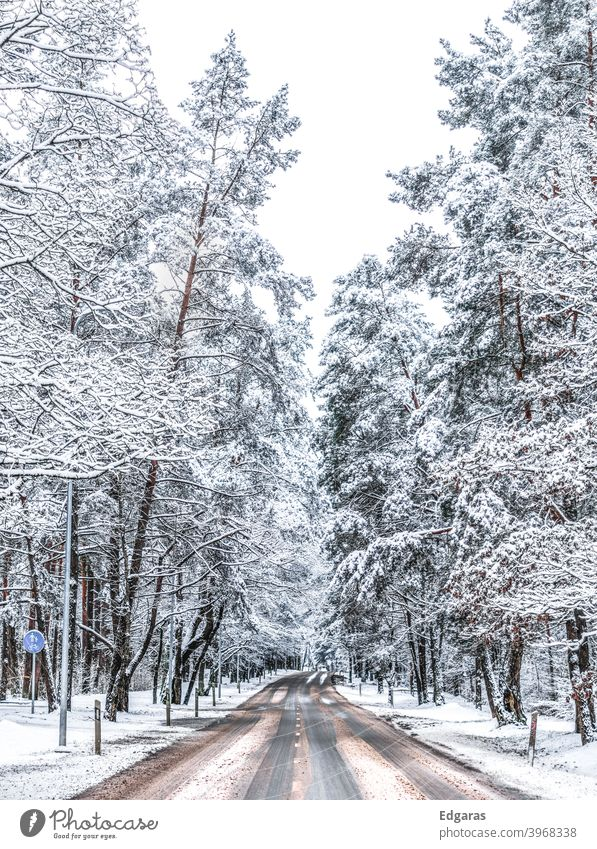 Winter road in a forest Forest road Road Forest winter snowy road snowy trees Trees cold Snow landscape nature ice outdoor season white day natural travel