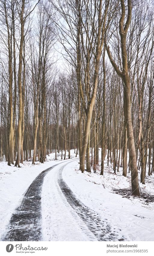 Track in beech forest during snowy winter. road landscape way trip travel journey nature drive wood track tree cold season day ice
