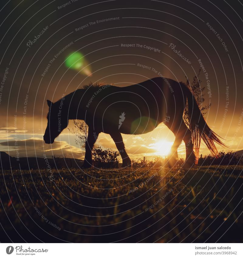 horse and sunset in the meadow silhouette sunlight animal animal themes wild nature cute beauty elegant wild life wildlife rural rural scene field country