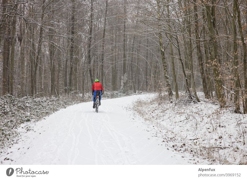 Winter sports cyclists Sports Snow Forest Winter forest Nature Tree Exterior shot Landscape Winter's day Snowscape Snow layer Colour photo Winter vacation