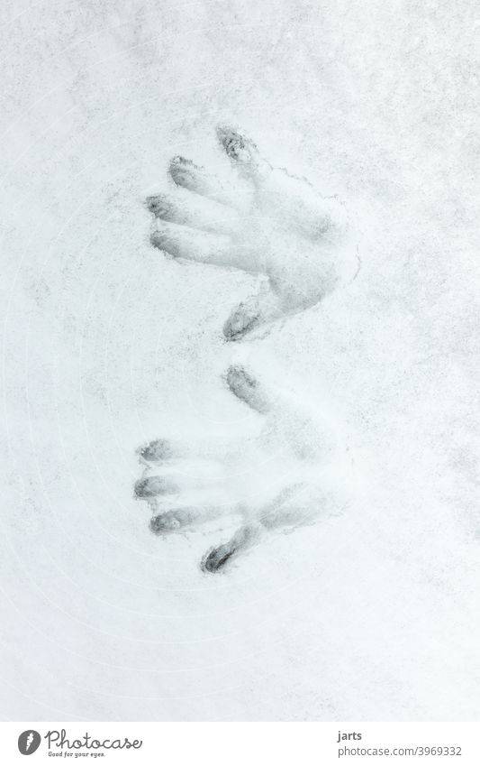 Two handprints in the snow Snow Cold Hand hands Fingers Winter Imprint Detail Fingerprint Tracks Deserted Palm of the hand White Close-up Frost Sign Frozen
