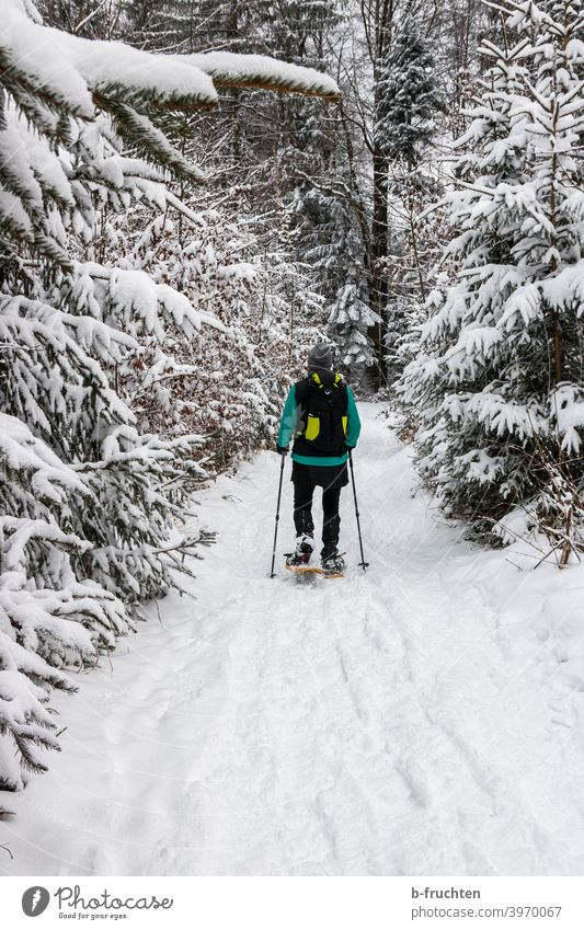 Snowshoeing in the winter forest Snow shoes Hiking person Woman Tracks Winter Exterior shot Nature Winter sports Sports Going Alps Day Leisure and hobbies Cold