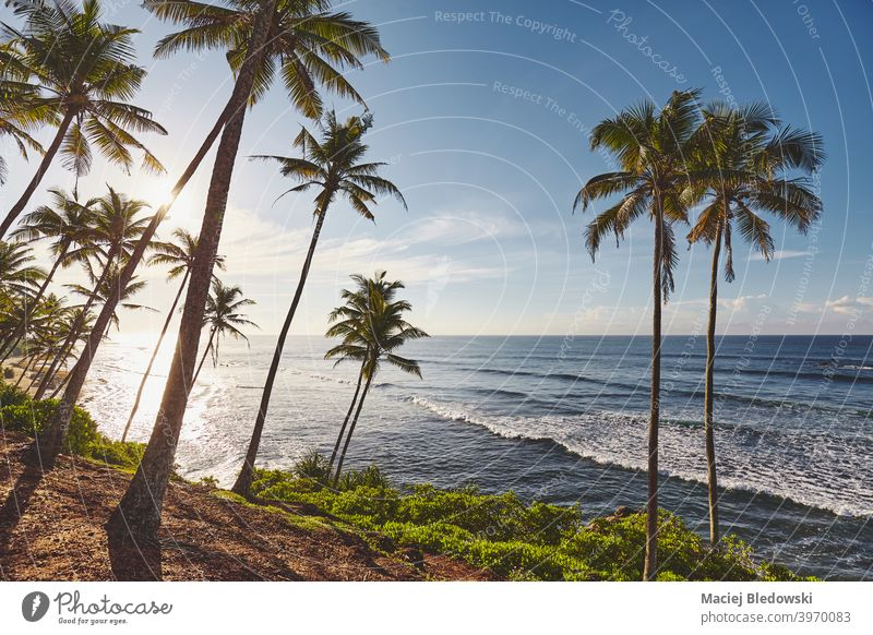 Tropical beach with coconut palm trees at sunrise. sea nature tropical paradise beautiful sunset ocean island landscape destination water vacation holiday
