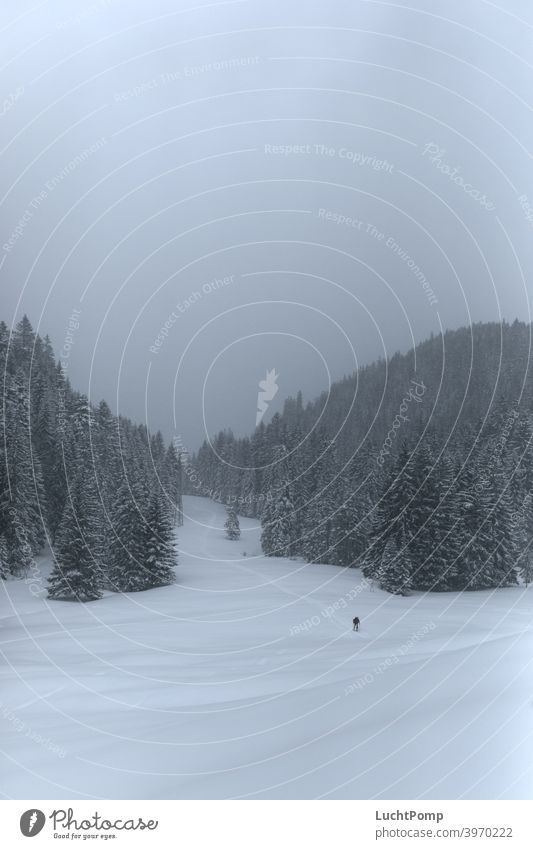 Skier walks through lonely snowy landscape Snow Loneliness Lonely Ski tour go on tour tourers Spruce forest Forest fir forest snow-covered trees snowed in hike