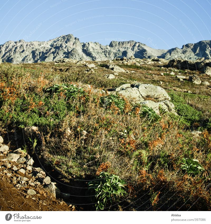 Mountain flora in Corsica Vacation & Travel Trip Far-off places Freedom Summer Hiking Nature Landscape Plant Animal Earth Sky Cloudless sky Beautiful weather
