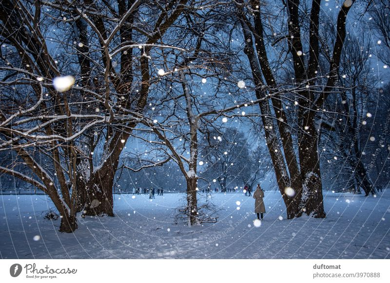 Landscape during snowfall in winter Night Snow snowflakes Tree snowy christmas tree Light Winter Cold Snowfall Nature White Frost Weather Bad weather Climate